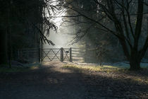 Sunlit Gateway by David Tinsley