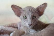 Dsc5203-dot-olh-kitten-08-13