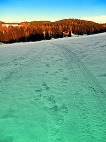 Schoeneggtrail
