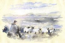 Sheep-in-ireland-m