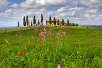 Toscana0513-1179