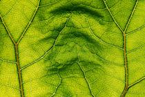 Green 1018 by Mario Fichtner