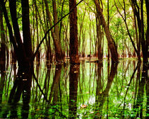 Afton Bayou 1 von Dan Dorland