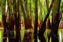 Afton Bayou 2 von Dan Dorland