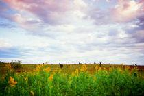 Open-prairie