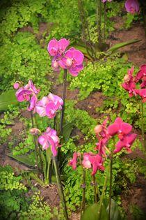 Frühlingsblüten von Ute Bauduin