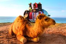 Dromedar liegt im Sand der Wüste von Marokko in Afrika von Gina Koch