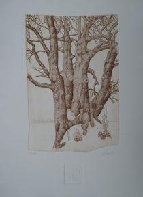 Winterbuchen by Ralf Schneider