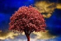 'Tree In Red' von CHRISTINE LAKE