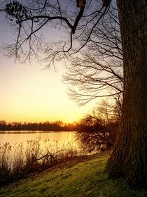 Blick auf den Berger See by Daniel Heine