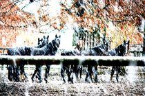 Erster, dicker Schnee auf der Koppel by vanitas-vanitas