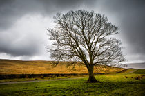 Single tree in stormy weather von David Hare