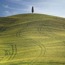 Toscana0513-0555
