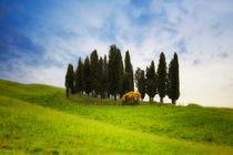 Toscana0513-0534