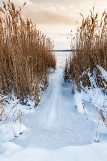 Winter am Bodden by Rico Ködder