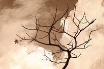 'Waiting for Spring' von CHRISTINE LAKE
