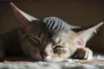 Dsc-1990-dot-abi-kitten1-02-15