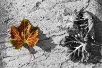Autumn-tint