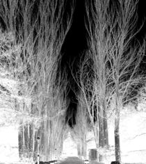 100-0798-infared-trees
