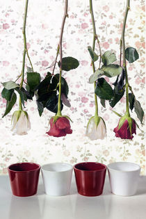 Rose-095