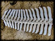 Skeleton  by Marnie Walis