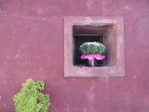 Grün an Pink by Susanne Schröder