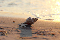 Shell on the sea / Muschel am Meer by Tanja Riedel