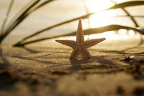 Goldener Seestern  / Starfish Still life on the beach von Tanja Riedel