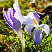 Zauber des Frühlings  von captainsilva