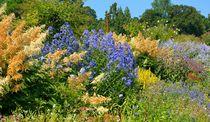 Blumengarten by gscheffbuch