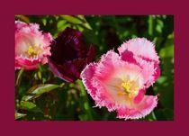Schönheiten in pink mit Rahmen by gscheffbuch