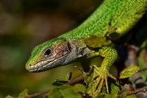Lizard Wizard by Georgi Koncaliev
