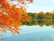 Ein goldener Herbsttag by gscheffbuch