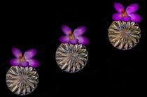 Crystal Spring by Dave  Byrne