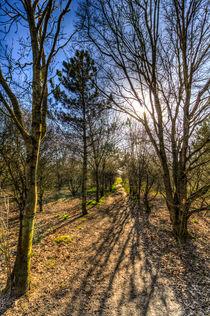 A Forest Walk by David Pyatt