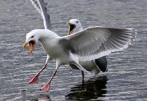 Crazy Seagulls von Sue Harper