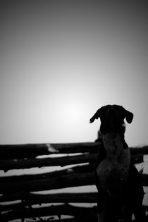 Snoop Dog by Bastian  Kienitz