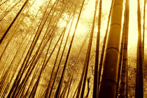 MAGICAL NATURE - WONDERFUL BAMBOO I von Thomas Kretzschmar