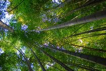 MAGICAL NATURE - WONDERFUL BAMBOO II by Thomas Kretzschmar