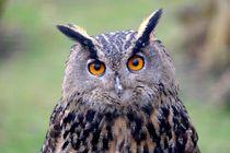 Uhu - Owl - Eule by Jörg Hoffmann