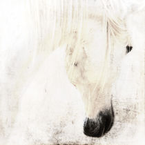innocenza by artfulhorses-sabinepeters