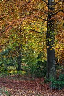 Herbstbäume von AD DESIGN Photo + PhotoArt