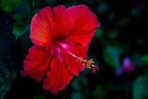 Flower by Lev Kaytsner