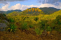 Agave in der Sierra de Escambray by Christian Behring