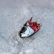Abgerissener Fischkopf von Gina Koch