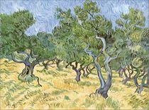 oliveraies by Delphine Antoine-Chaperon