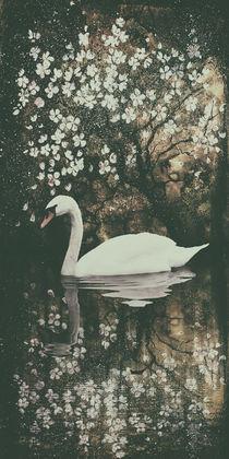 'Schwanensee  - Swan lake III' by Chris Berger