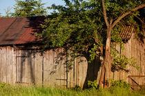 old wooden shack lone tree  von Arletta Cwalina