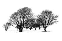 Cissbury Trees by Malc McHugh