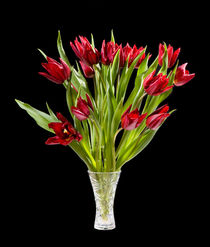cut tulips bouquet in glass vase by Arletta Cwalina